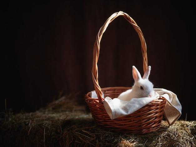 Weißes kaninchen in einem korb im heu