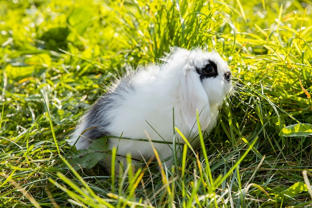 Weißes kaninchen mit schwarzen flecken sitzt auf dem rasen