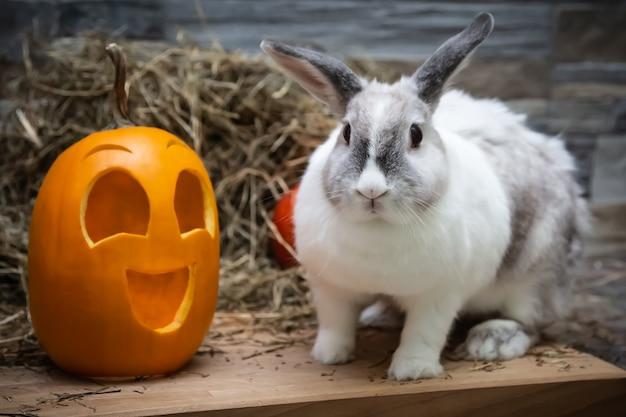 Weißes kaninchen und gelbes kürbis-halloween-symbol auf einem holzbrett einer steinwand