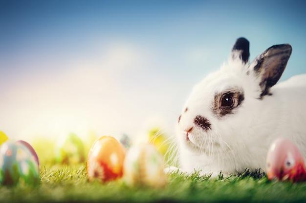 Weißes kaninchen und ostereier auf frühlingshintergrund.