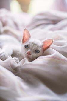 Weißes kleines kätzchen, das auf dem bett niederlegt