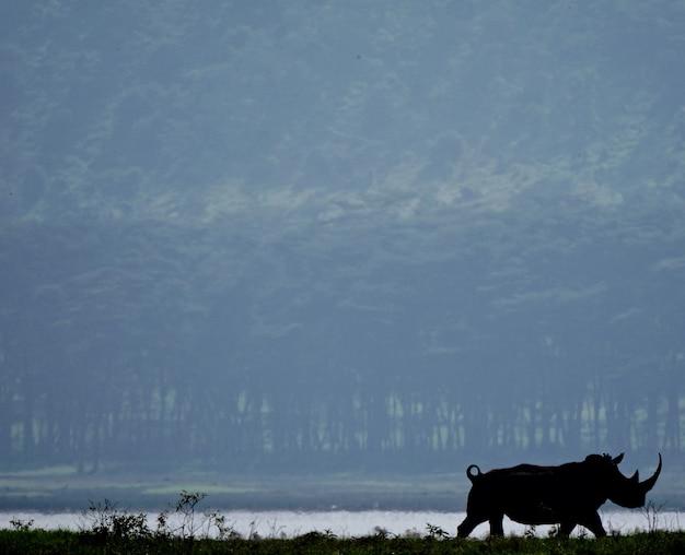 Weißes nashorn im see nakuru
