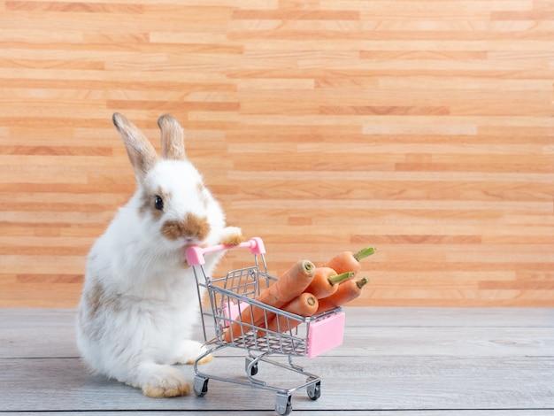 Weißes niedliches babykaninchen stehend und halten den einkaufswagen mit babykarotten auf holzwand.