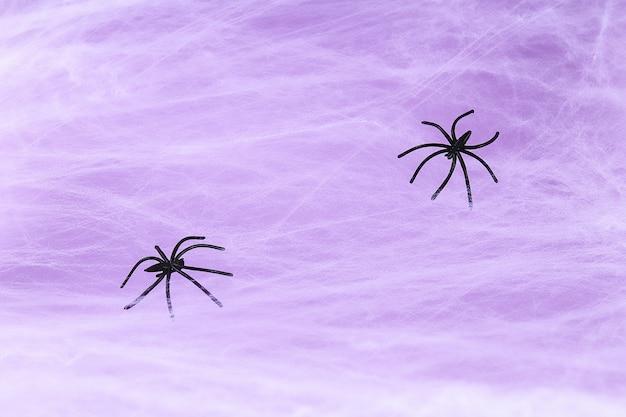 Weißes spinnennetz mit schwarzer spinne auf purpur