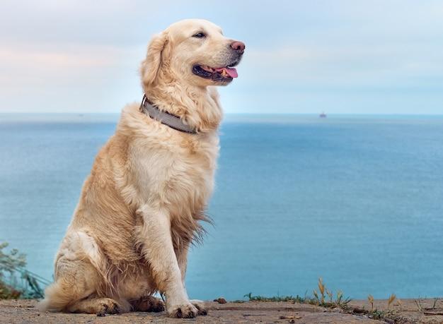 Weißgoldener labrador-retriever-hund am strand