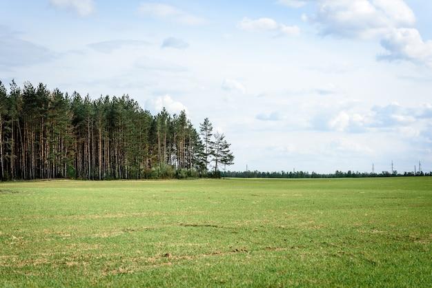 Weißrussische landschaft. frühlingsfeld und wald auf himmelhintergrund.