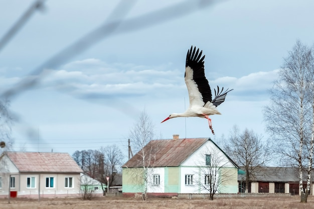 Weißstorch fliegt an häusern vorbei