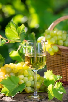 Weißwein im glas, junge rebe und weintraube vor grünem frühlingshintergrund