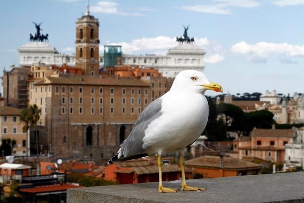 Weitblick auf rom stadt von palatino