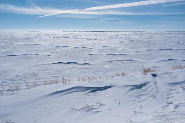 Weites schneebedecktes feld in saskatchewan mit gras, das aus snowbank heraus stößt