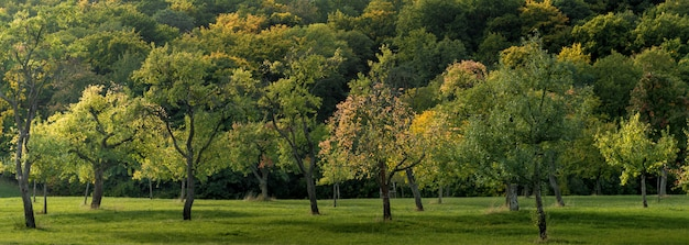 Weitwinkelaufnahme eines mit gras bedeckten feldes und voller schöner bäume, die tagsüber eingefangen wurden