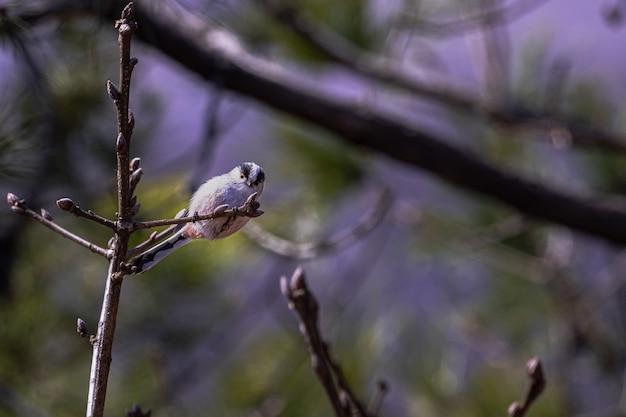 Weitwinkelaufnahme eines weißen vogels, der oben auf einem ast sitzt