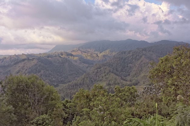 Weitwinkelaufnahme von bäumen und wäldern auf einem berg während des tages
