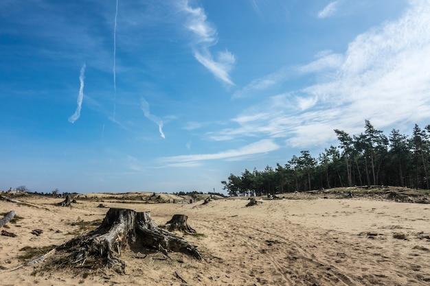 Weitwinkelaufnahme von sand vor dem wald unter einem bewölkten himmel
