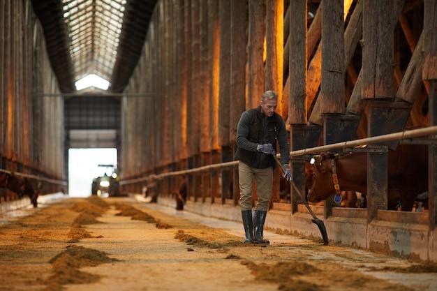 Weitwinkelporträt des reifen landarbeiters, der kuhstall während der arbeit auf familienranch reinigt, kopieren raum