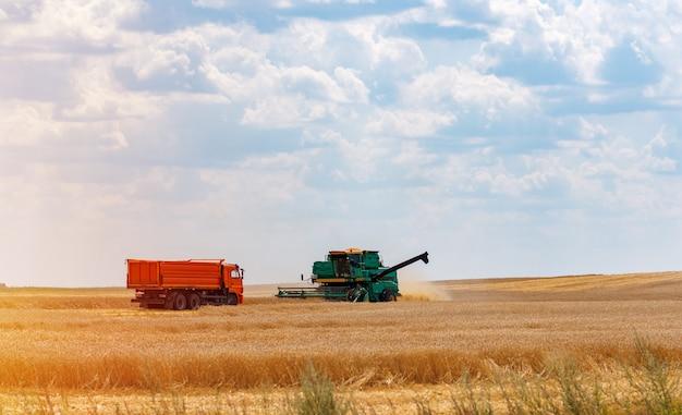 Weizen ernten. erntemaschine entfernt weizen auf dem feld