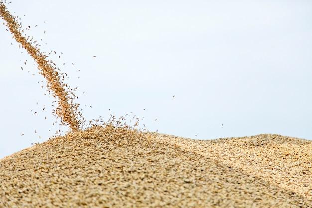 Weizen fällt auf hügel