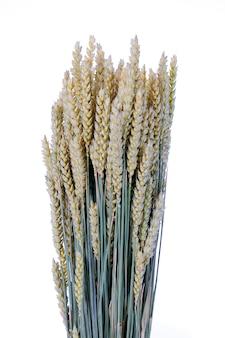 Weizen isoliert auf weißem raum