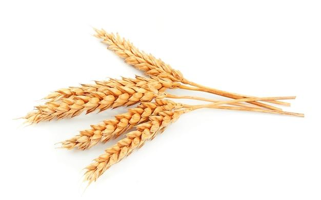 Weizen isoliert auf weißer nahaufnahme
