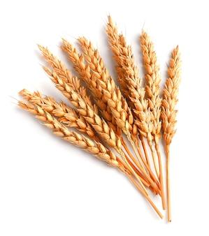 Weizen lokalisiert auf einem weißen hintergrund