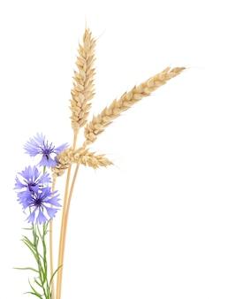 Weizen und kornblumen.