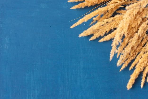 Weizenähren auf einem farbigen hintergrund isoliert. flach liegen. getrocknete blumen. platz für text.