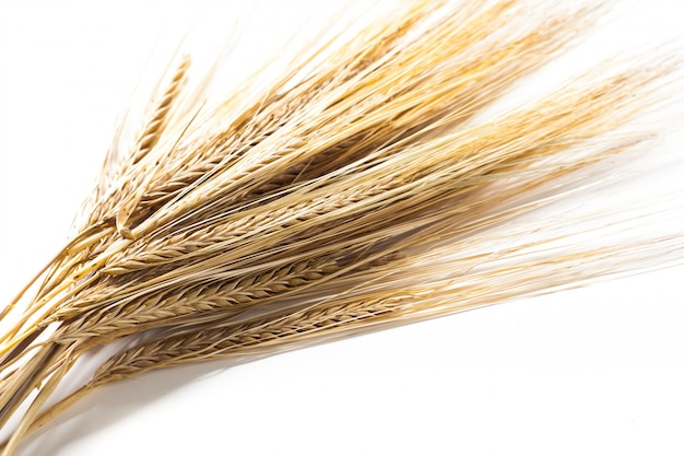 Weizenähren getrennt auf weiß