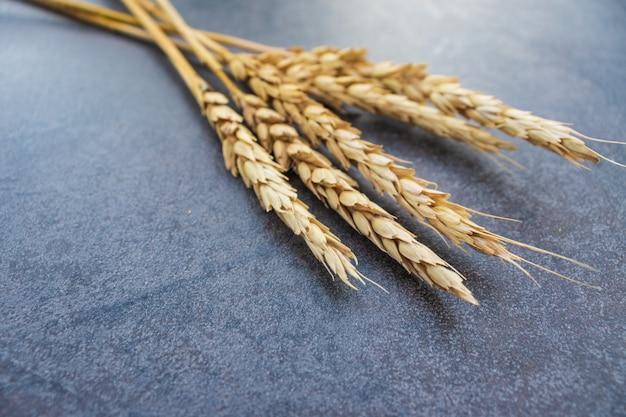 Weizenähren und roggen auf dunkelblauem hintergrund. ansicht von oben, flach, kopienraum. herbstzusammensetzung, erntekonzept