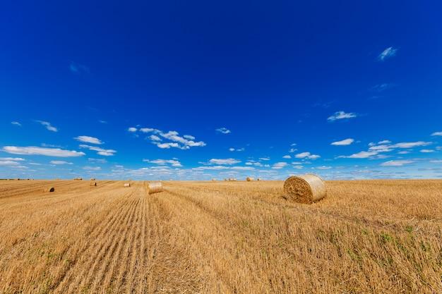Weizenfeld nach der ernte mit strohballen bei sonnenuntergang