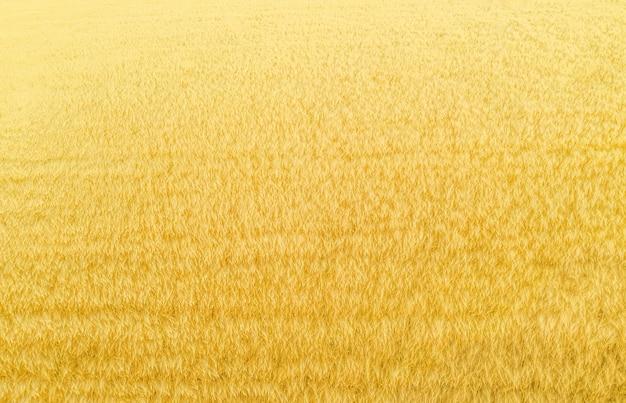 Weizenplantage von oben, natürlicher hintergrund