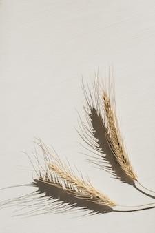Weizenspitzen auf weiß.