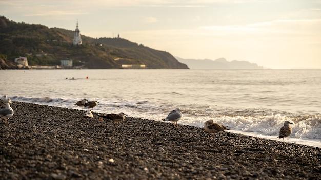 Welle mit schaum am strand und möwen, natürlicher hintergrund.