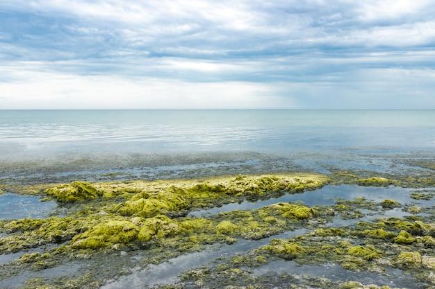 Wellen des meerwassers werfen grünalgen auf dem strand an einem regnerischen tag. ökologie und naturkatastrophen-konzept