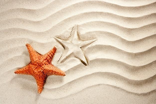 Wellenförmige sandstarfish-sommerferien am strand