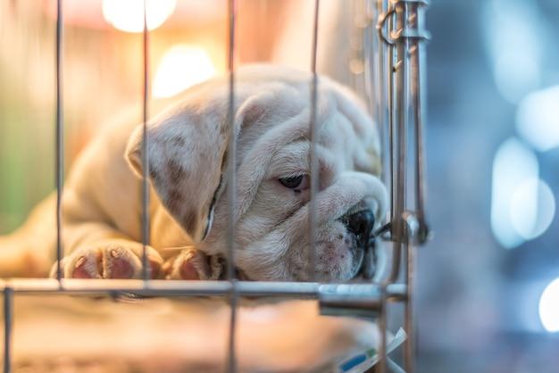 Welpe warten im hundekäfig in der tiergeschäfthoffnung zur freiheit