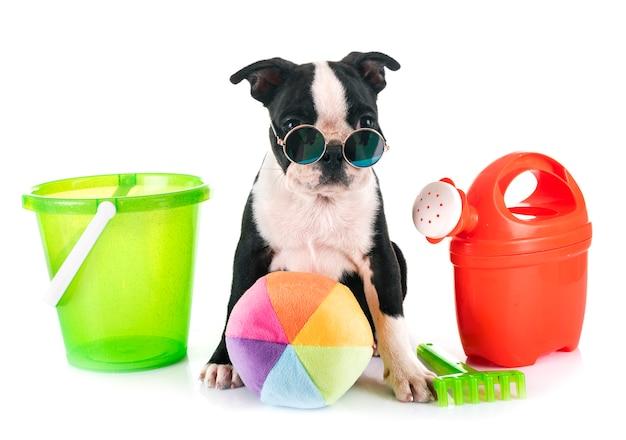 Welpen-boston-terrier