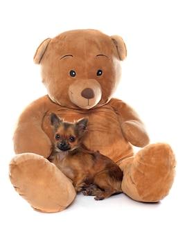 Welpen-chihuahua und teddybär