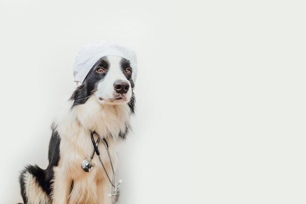 Welpenhund-grenzcollie mit stethoskop gekleidet im arztkostüm