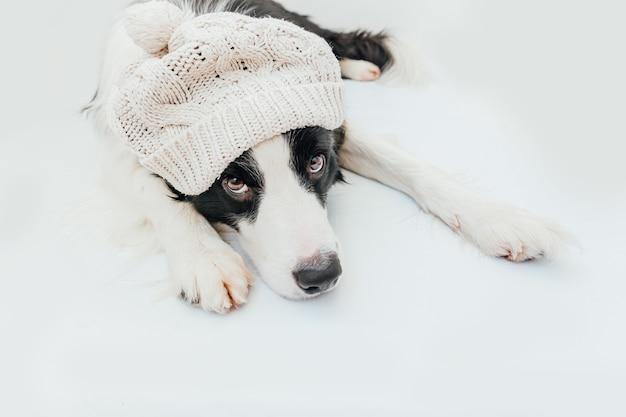 Welpenhunde-grenzcollie, der warmen weißen hut der gestrickten kleidung trägt, lokalisiert auf weißem hintergrund
