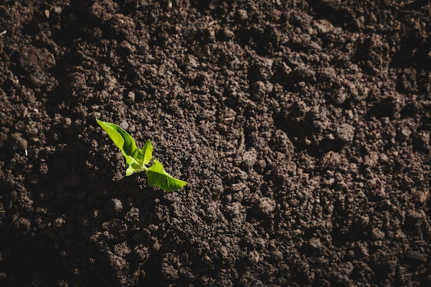 Welttag der liebe zum baumpflanzen. hinzufügen von sauerstoff zur luft. weltumwelttag