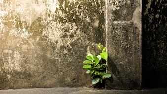 Wenig Baum wächst an alter Betonmauer durch