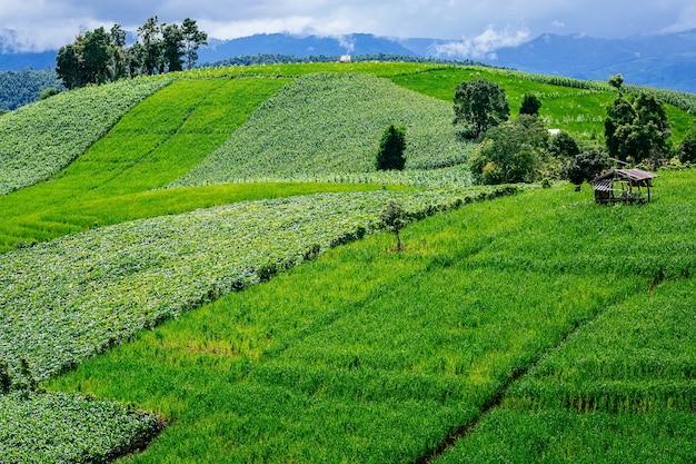 Wenig hütte umgeben durch ernte und mais auf den berg in der landschaft.