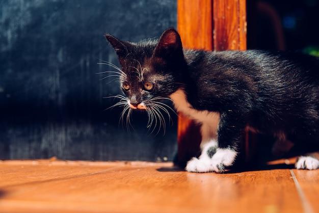 Wenn sie ein kätzchen haben, müssen sie es richtig pflegen.