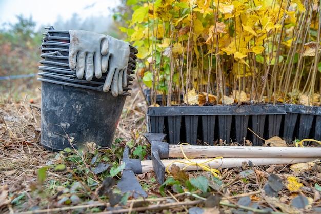 Werkzeuge zum pflanzen neuer bäume im wald für den wiederaufbau nach naturkatastrophen