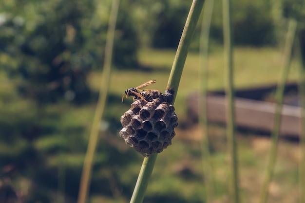 Wespe, die eine nestnahaufnahme baut stock photography. vespula-insekt, das auf dem bienenstock sitzt und mit den flügeln wedelt, um es an heißen sommertagen abzukühlen