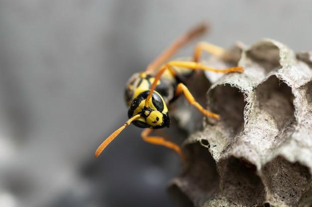 Wespe und ihr haus in einer metallbox kleines wespenhaus