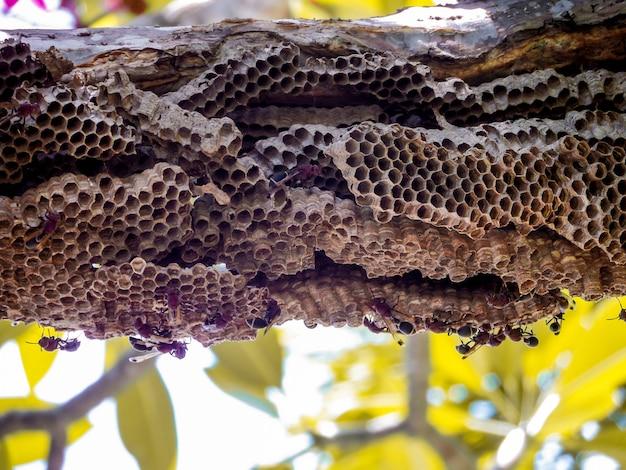 Wespenarbeitskraft und bienenstockwespe auf baum im garten