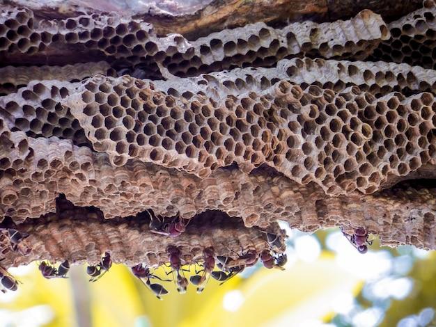 Wespenarbeitskraft und bienenstockwespe auf plumeriabaum im garten