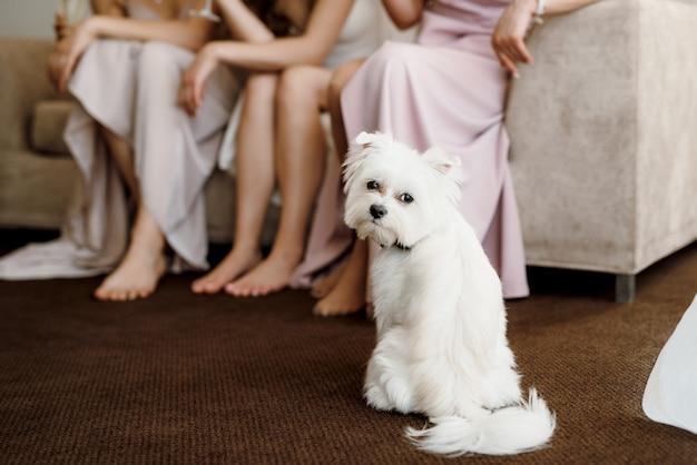 White terrier neben einem mann