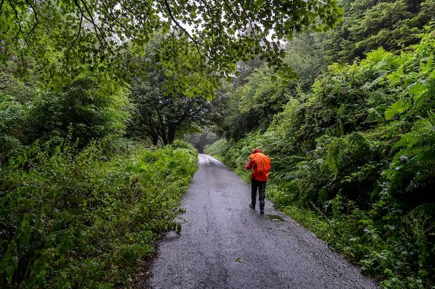 Wicklow way an einem regnerischen tag mit einem mädchen in der pfote.